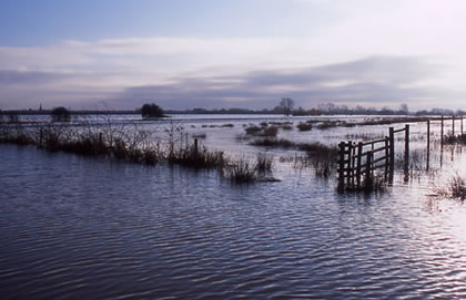 Flooded Fenland